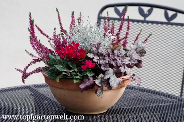 herbstliche Blumendeko für die Terrasse - Gartenblog Topfgartenwelt
