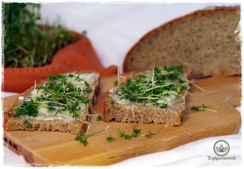 Warum Kresse ohne Erde aussäen? - Frische Kresse auf Brot - Gartenblog Topfgartenwelt