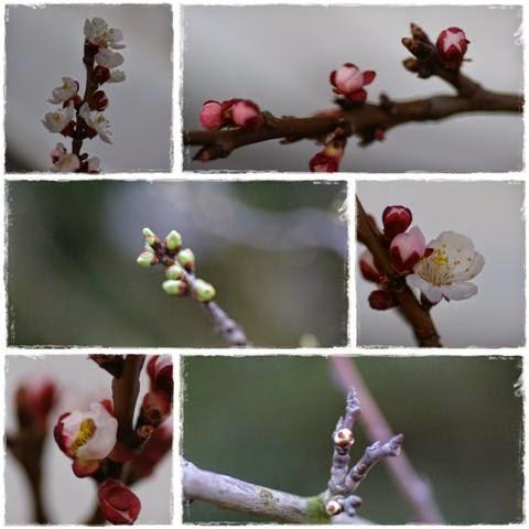 Der Obstgarten | Gartenbuch!