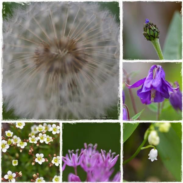 Blüten im Garten - Gartenblog Topfgartenwelt