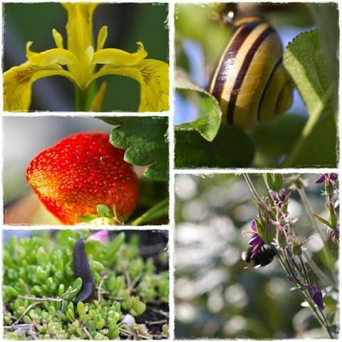 Fotocollage aus dem Garten - Gartenblog Topfgartenwelt