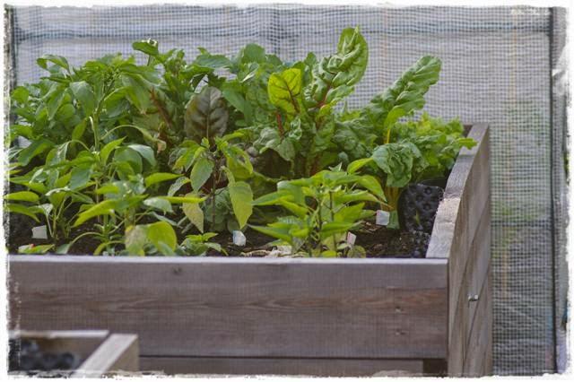 Hochbeet - Gartenblog Topfgartenwelt