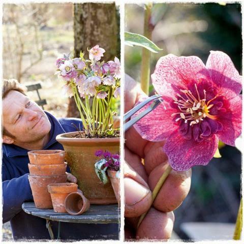 Bild aus Pflanzen-Schätze - Gartenblog Topfgartenwelt