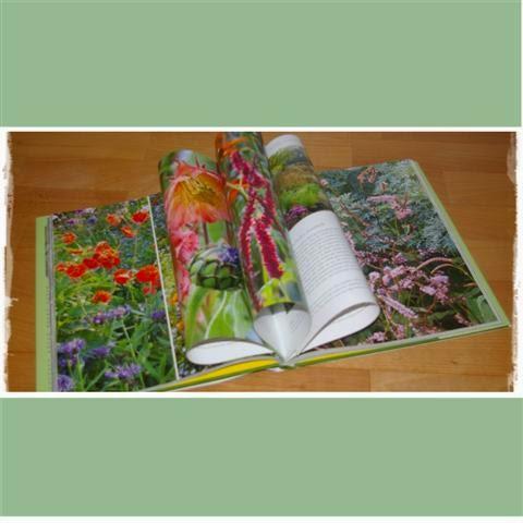 Auszug aus Pflanzen-Schätze - Gartenblog Topfgartenwelt