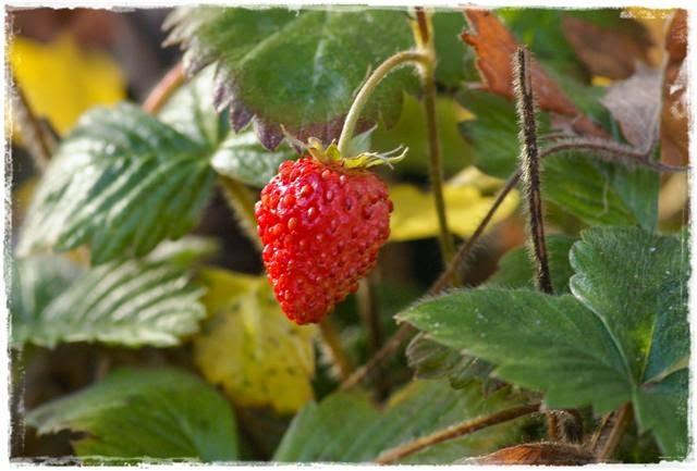 Obst – Das Grüner Daumen Konzept | Gartenbuch!
