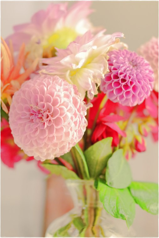 Blumenstrauss aus Dahlien - Blog Topfgartenwelt
