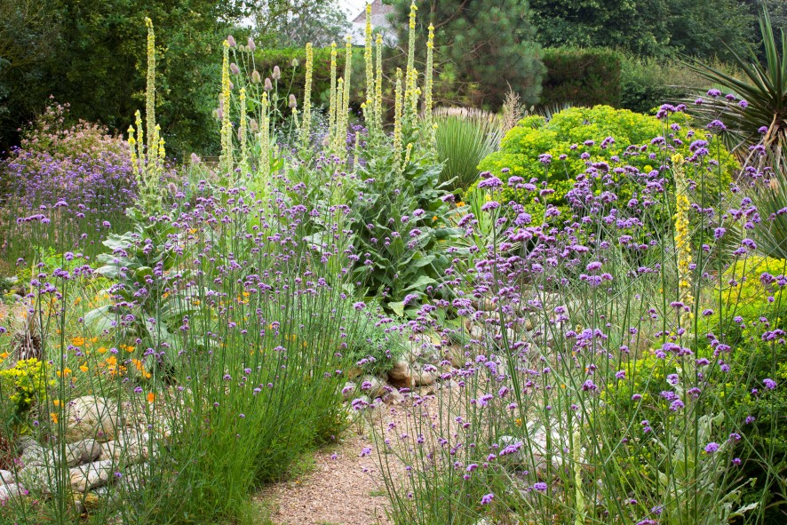Staudenbeet - Gartenblog Topfgartenwelt