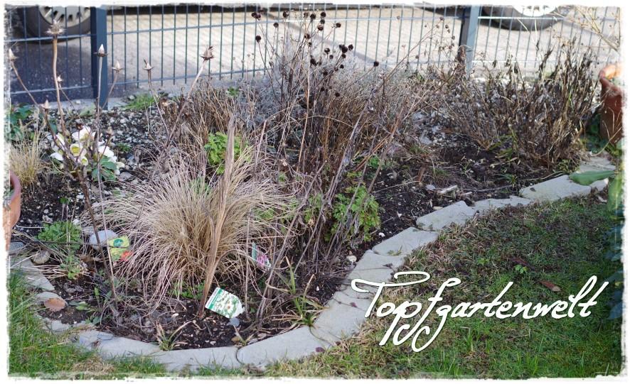 Sonnenbeet - Gartenblog Topfgartenwelt