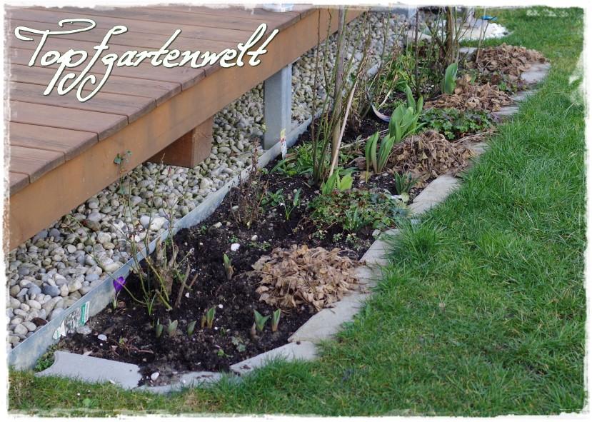 Rosenbeet - Gartenblog Topfgartenwelt