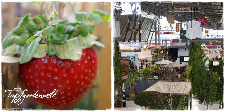 Messehalle - Blog Topgfgartenwelt