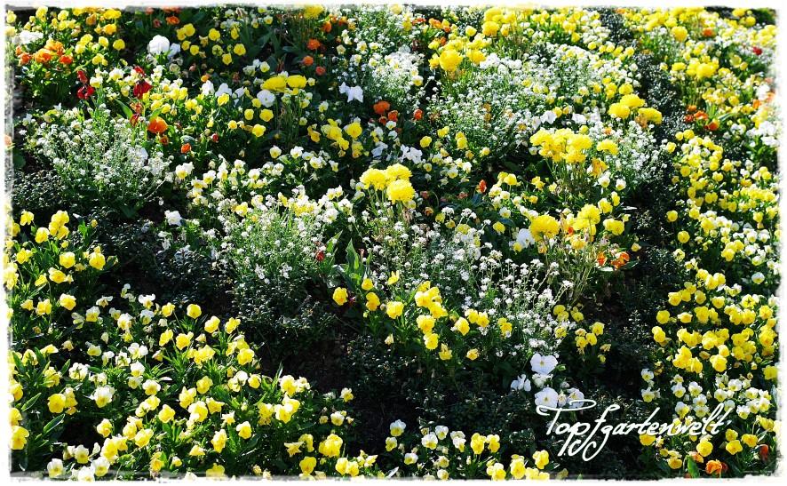 Ein Garten ist niemals fertig | Gartenbuch!