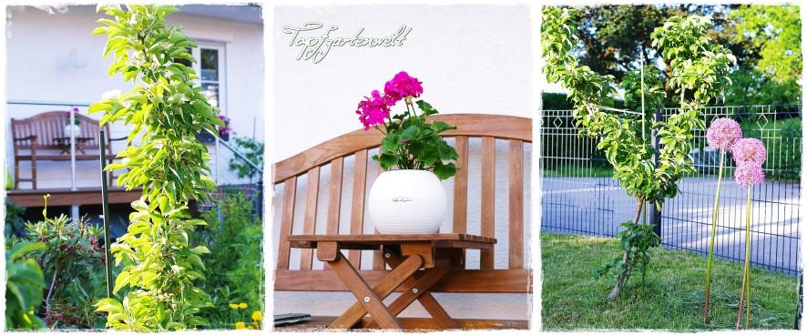 Taschenatlas resistente und robuste Obstsorten - Gartenblog Topfgartenwelt