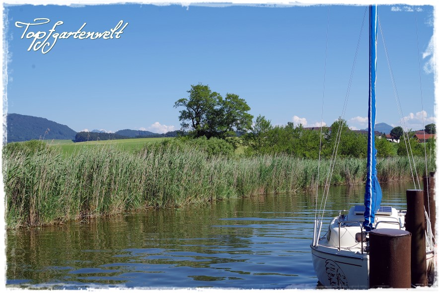 Wallersee mit Boot