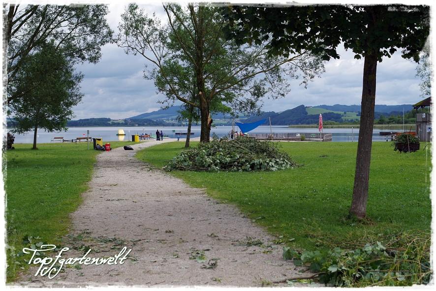 Unwetter im August 2016 – Sturmschäden in Seekirchen!