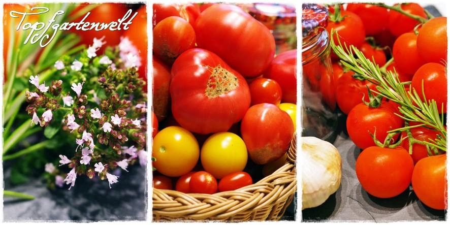Zutaten getrocknete Tomaten