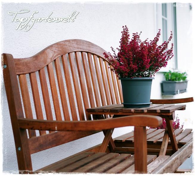 Wohnen in Grün – dekorieren und stylen mit Pflanzen | Indoorgardening-Buch!