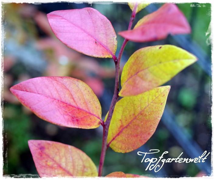 Wildobst für meinen Garten | Gartenbuch!