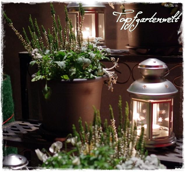 Heide Stiefmütterchen Silberblatt im Kerzenschein