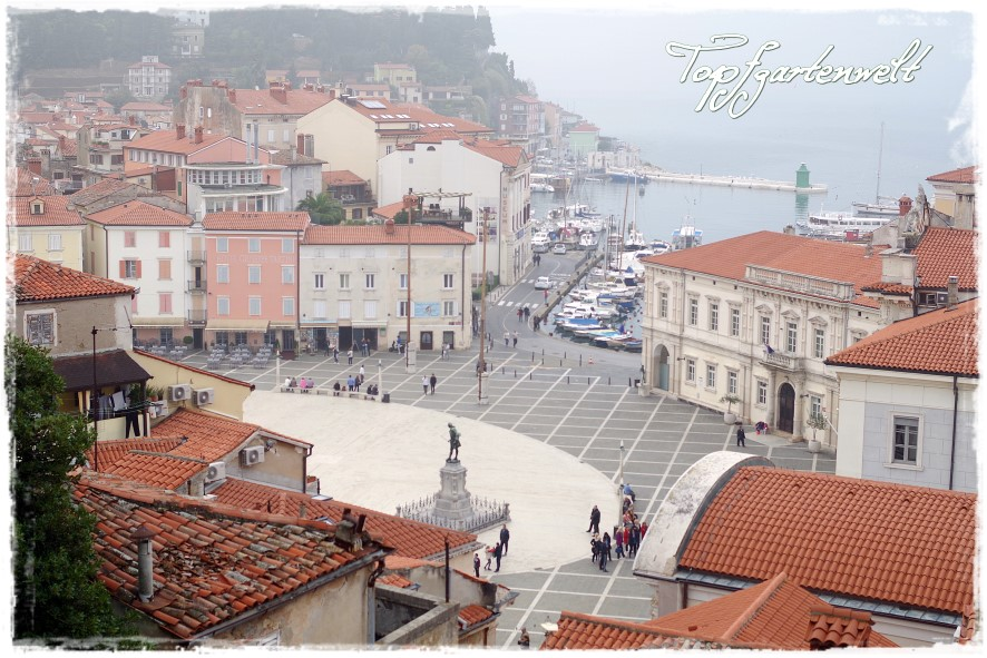 Piazza Tartini Piran