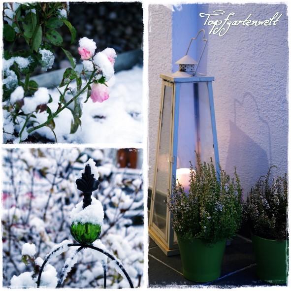 Rose mit Schnee und Deko für Hauseingang