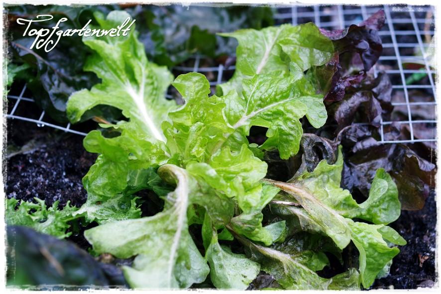 Frisches Gemüse im Winter ernten! | Gartenbuch!