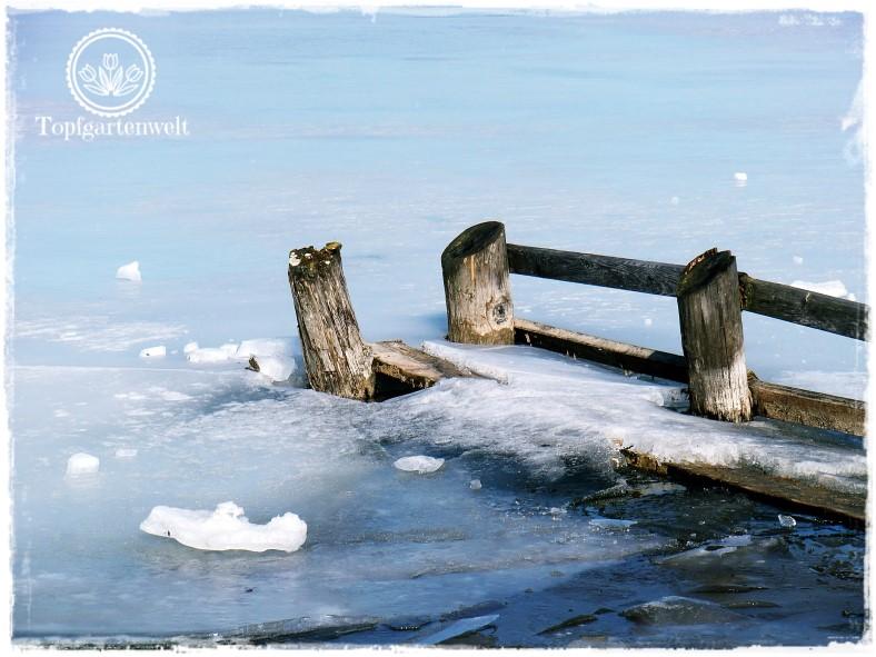 Gartenblog Topfgartenwelt Wallersee: vom Eis zerdrückte Wellenbrecher - Wintermomente am Wallersee