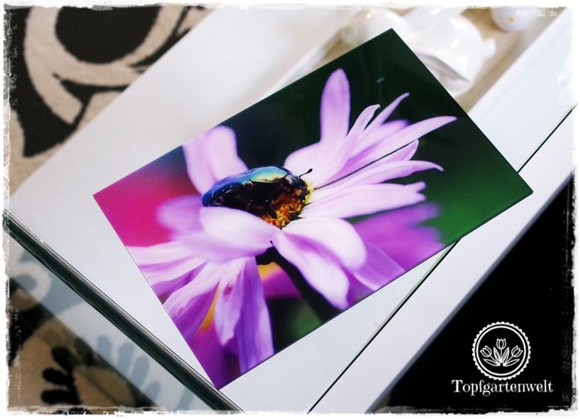 Gartenblog Topfgartenwelt Deko: Gallery Print von Saal Digital