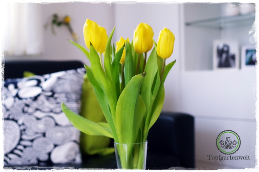 Gartenblog Topfgartenwelt Deko: gelber Tulpenstrauß auf Wohnzimmertisch