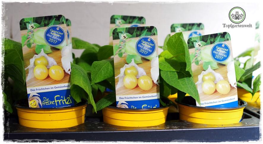 Gartenblog Topfgartenwelt Gartenmesse: Garten Salzburg 2017 Gemüse des Jahres Freche Fritzi Andenbeere