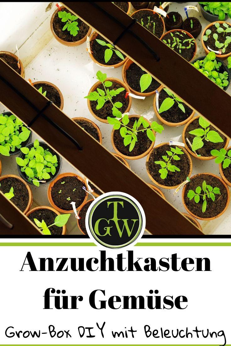 Anzuchtkasten: Die Anzucht von Tomaten und Paprika beginnt bereits früh im Haus. Auf der Fensterbank ist das Licht im Winter allerdings nicht ausreichend für ein optimales Wachstum. Eine Anzuchtkiste oder Grow-Box mit Tageslichtlampen ist eine optimale Lösung. #anzucht #gemüse #topfgartenwelt