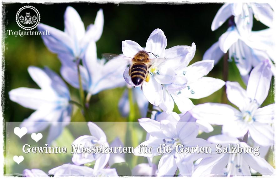Gartenblog Topfgartenwelt Kooperationen: Gewinnspiel Verlosung Messekarten Gartenmesse Garten Salzburg 2017