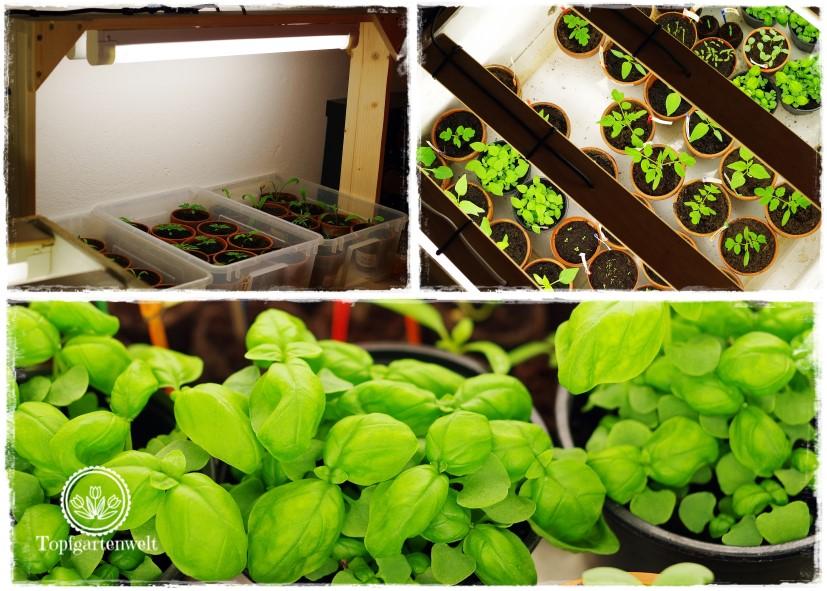 Pflanzenanzucht mittels künstlicher Beleuchtung | Grow-Box | Gartenblog Topfgartenwelt