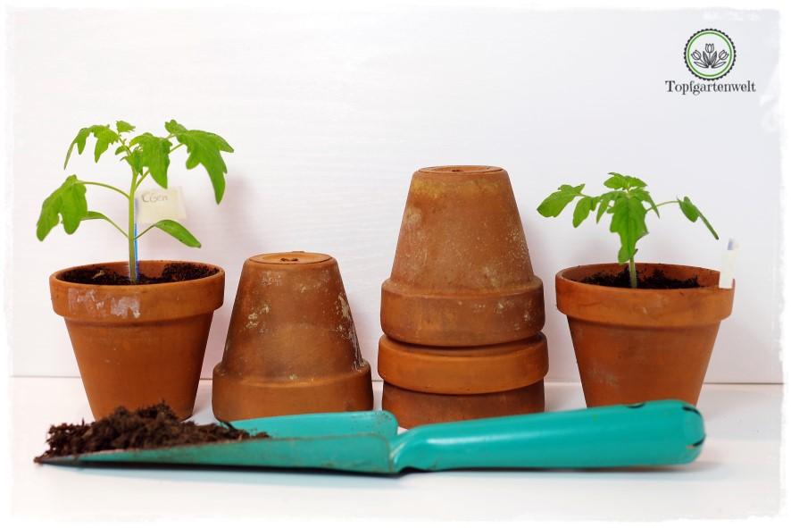 Gartenblog Topfgartenwelt Aussaat Anzucht Grow-Box: Tomaten Jungpflanzen Tontöpfe