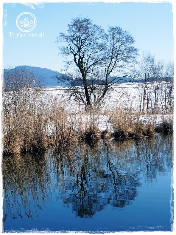 Gartenblog Topfgartenwelt Wallersee: Spiegelung Reflexion eines Baumes beim Bootsplatz Handlechner