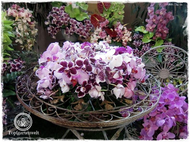 Gartenblog Topfgartenwelt Gartenmesse Blühendes Österreich 2017: Orchideen Blütenarrangements