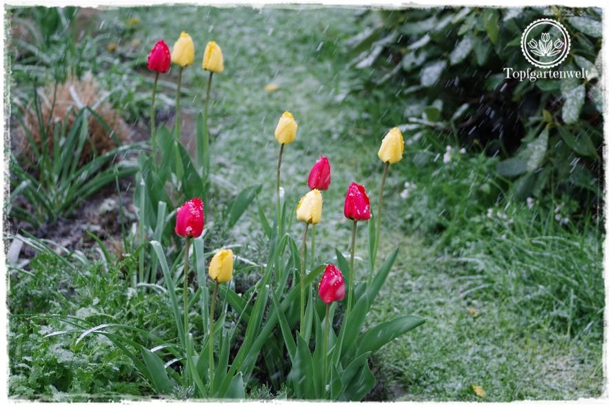 Gartenblog Topfgartenwelt Wetter: Der Wintereinbruch im April 2017 war recht heftig.