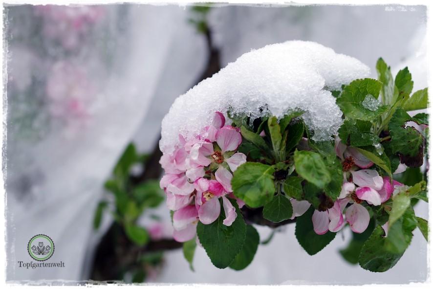Gartenpraxis im Klimawandel | Gartenbuch!