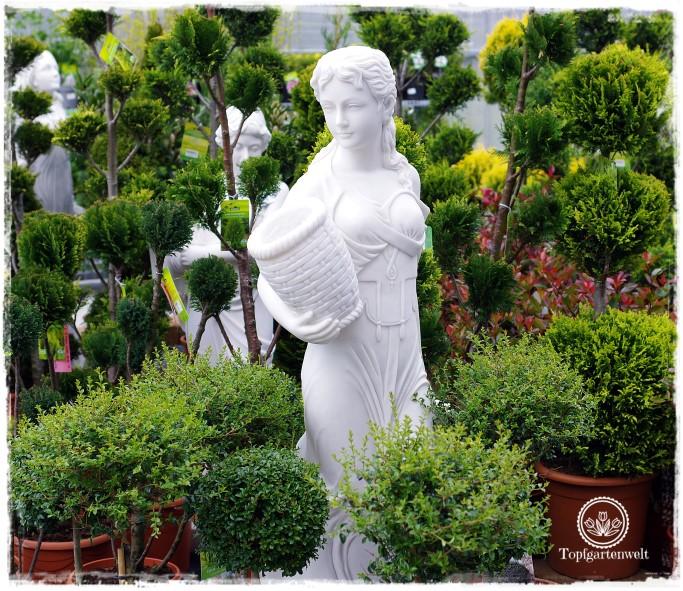 Gartenblog Topfgartenwelt Eröffnung Gartencenter Dehner Salzburg: Statuen und Buchs