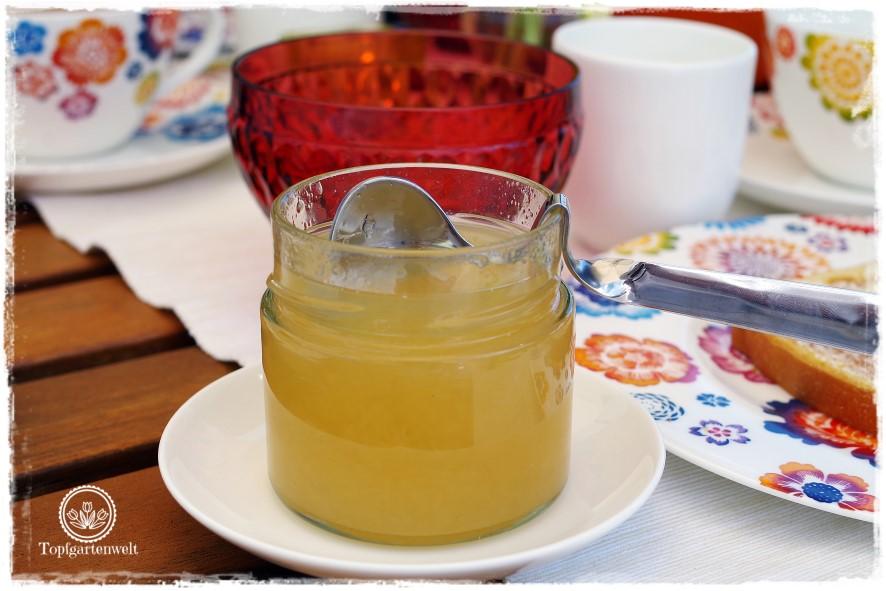 Gartenblog Topfgartenwelt Rezept: Zitronengelee-Zitronensirup