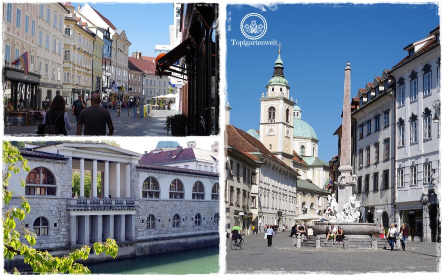 Gartenblog Topfgartenwelt Slowenien: Laibach Innenstadt, Pestsäule