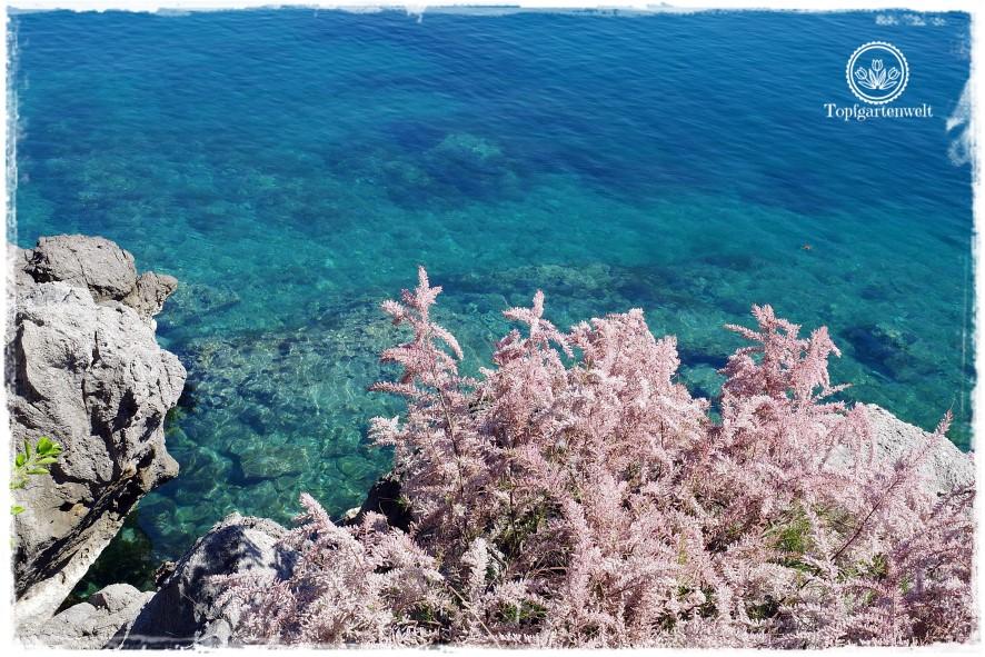 Gartenblog Topfgartenwelt Kroatien: Lungo Mare