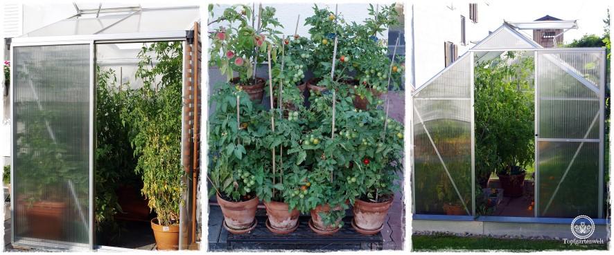 Gartenblog Topfgartenwelt The Grand Paradeis Show: Tomatenanzucht im Kleinen für den Garten zu Hause