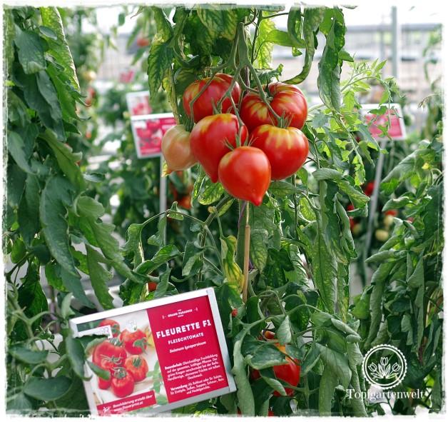 Gartenblog Topfgartenwelt The Grand Paradeis Show: Tomatensorte Fleurette F1
