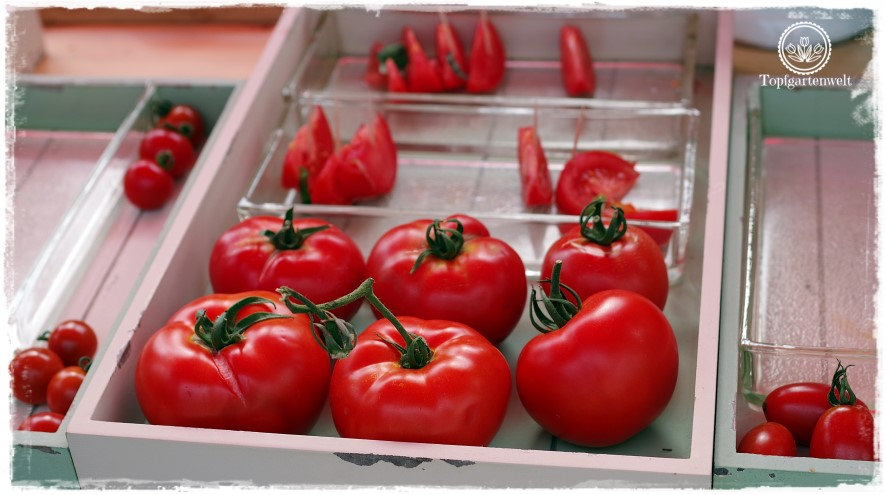Gartenblog Topfgartenwelt The Grand Paradeis Show: sämtliche Tomaten der Ausstellung konnten verkostet werden