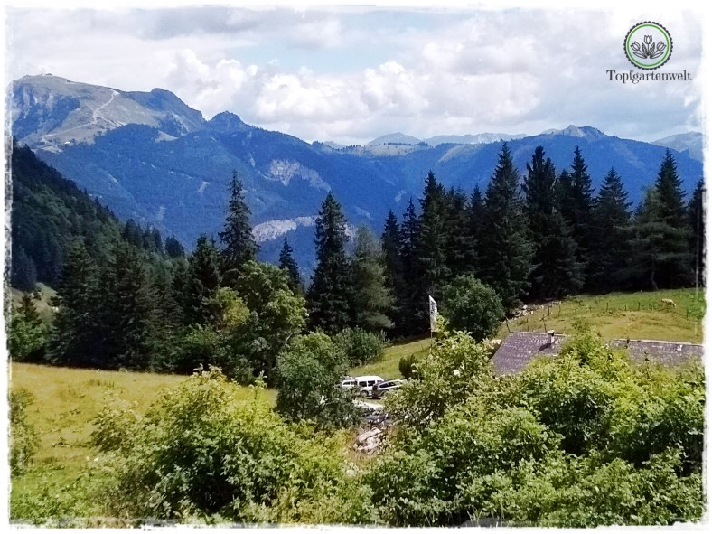 Gartenblog Topfgartenwelt Salzburg Almhütten: Illingerbergalm Ausblick