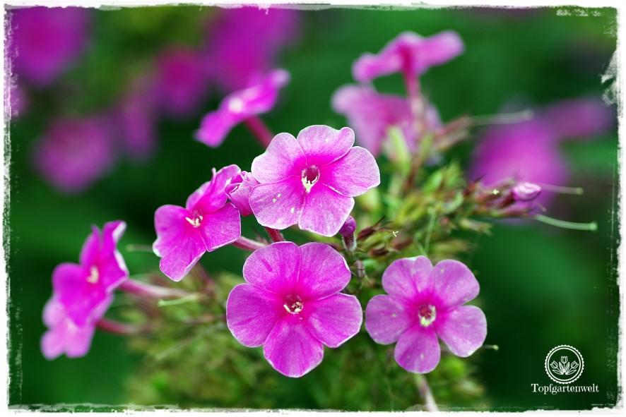Traumhafte Landgärten durch die Jahreszeiten | Gartenbuch!