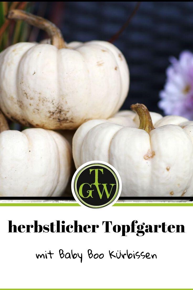 Blumendeko für den Topfgarten im Herbst mit Kürbissen. Passend für den Eingang. #blumendeko #eingang #herbst #kürbis