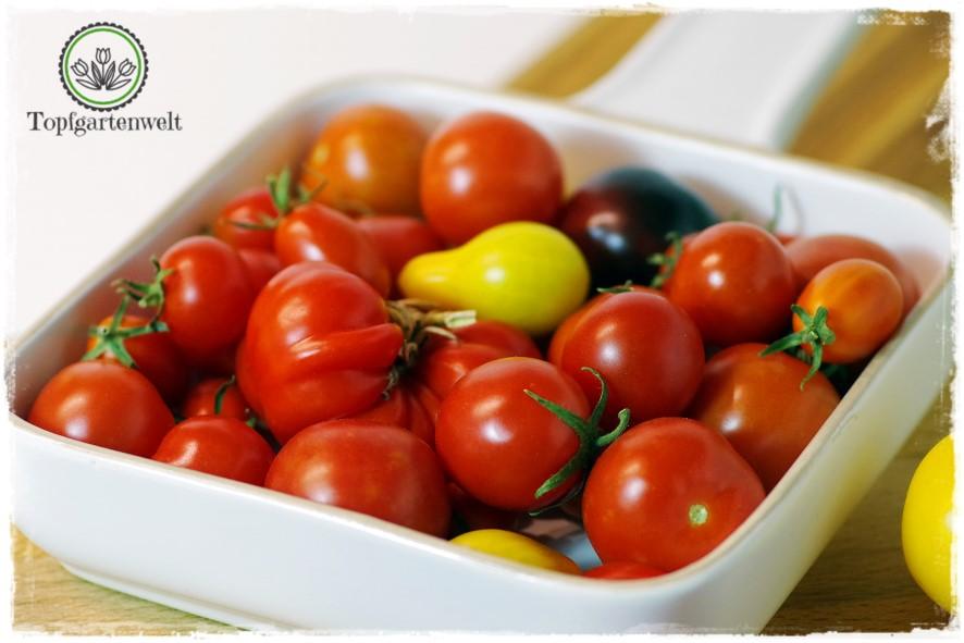 Gartenblog Topfgartenwelt Buchtipp Einkochen: tomaten einkochen italienisch