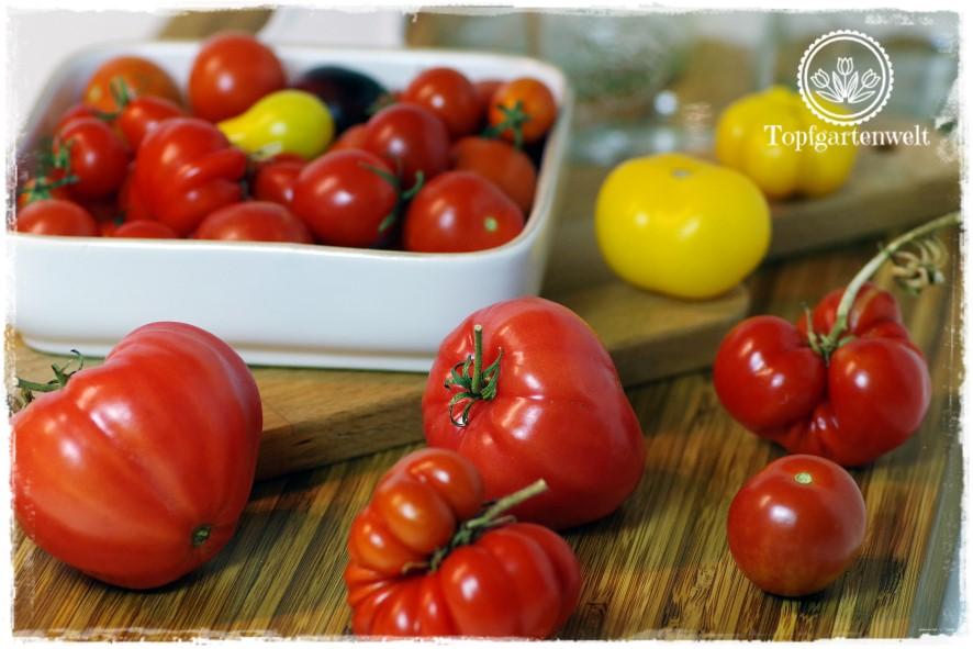 Gartenblog Topfgartenwelt Buchtipp Einkochen: tomaten einkochen mit haut
