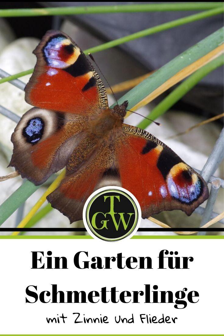 Einen Garten für Schmetterlinge gestalten? Welche Pflanzen eigenen sich dafür besonders gut für Insekten? Hier findest Du meine Tipps für einen perfekten Schmetterlingsgarten. #garten #schmetterlinge #Topfgartenwelt